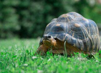 ile kosztuje żółw